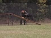 Výcviková neděle, 23.října 2011