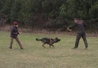 Poslední výcviková neděle, 18.prosince 2011, Blanka